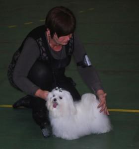 elsa dogs